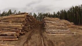 Raw wood storage Royalty Free Stock Images