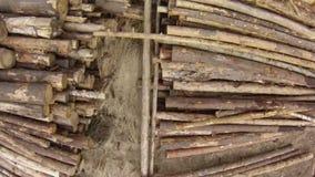 Raw wood storage Stock Image