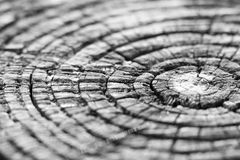 Raw wood texture photo Royalty Free Stock Image