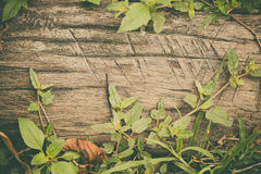 Raw wood, wooden slatted fence or lath wall background with gree Royalty Free Stock Photography