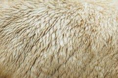 Raw wool. White raw wool of sheep Royalty Free Stock Photos