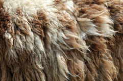Raw wool Royalty Free Stock Photos