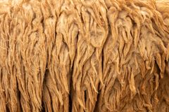 Raw wool background royalty free stock photography