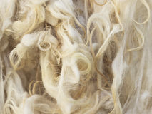Raw wool. Close up photo of raw wool royalty free stock images