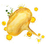 Raw yellow turnip Royalty Free Stock Photo