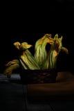 Raw Zucchini Flowers Stock Photos