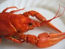 сrawfish Stock Images