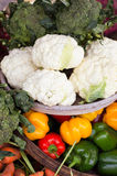 Raws of fresh organic vegetables on farmer market Stock Image