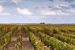 Vineyards near Bordeaux Royalty Free Stock Photo
