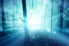 Ray światła lasowego drzewa tajemniczy mgłowy krajobraz Obraz Royalty Free
