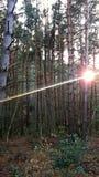 Ray światło między drzewami zdjęcia royalty free