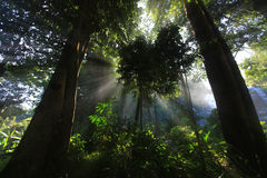 Ray światło przez drzew Zdjęcie Royalty Free