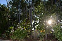 Ray allume le dépassement par les fleurs dans le jardin photos libres de droits