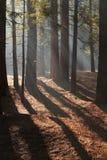 Ray av ljus Arkivfoto