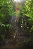 Ray av solljus som gör vägen till och med treetopsna Arkivfoto