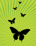 Ray burst and butterfly background vector. Bright green shades with ray burst swirl and butterfly silohouette vector Stock Image