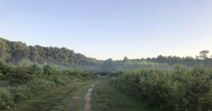 Ray da névoa no parque dos veterinários Foto de Stock Royalty Free