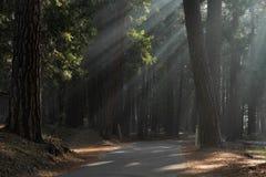 Ray de la luz Foto de archivo libre de regalías