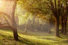 Ray de la luz a través de los árboles por la mañana brumosa Foto de archivo
