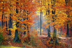 Ray de lumière par les arbres Photos libres de droits