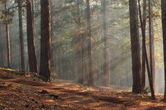 Ray de luz Imagens de Stock