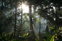 Ray della luce del sole nella foresta Immagini Stock