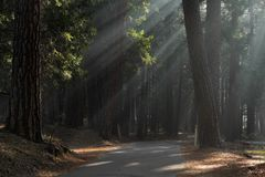 Ray des Lichtes Lizenzfreies Stockfoto