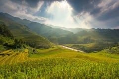 Ray des Lichtes und der schönen Kurve des Vietnam-Reisfeldes auf Terrasse Ansicht über den Duftstofffluß stockbild