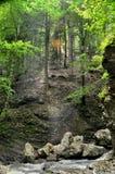 Ray di luce solare che fa il modo attraverso le cime d'albero fotografie stock