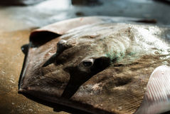 Ray fish. On concrete in sea market Royalty Free Stock Photos