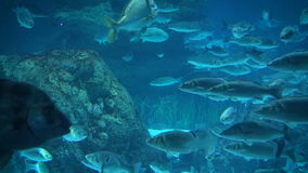 Ray and fishes in the aquarium of Barcelona, Spain stock footage