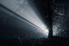 Ray In The Forest leggero fotografie stock libere da diritti