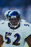 Ray Lewis Baltimore Ravens Stock Photography