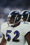 Ray Lewis Baltimore Ravens Stock Photos