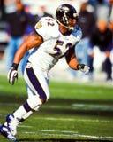 Ray Lewis Baltimore Ravens royaltyfria bilder