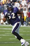 Ray Lewis Baltimore Ravens. Ray Lewis retired Linebacker for the Baltimore Ravens in game action during a regular season game royalty free stock photography