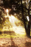 Ray of light. In the morning Royalty Free Stock Image