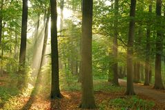Ray of light. In the woods Royalty Free Stock Photography