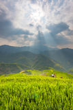Ray of light and Beautiful nature rice fields on terraced of Vietnam. Rice fields prepare the harvest at Northwest Vietnam Royalty Free Stock Photography
