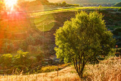 A ray of light breaks through the dramatic sky at sunset and hit a solitary tree on a hill Royalty Free Stock Images