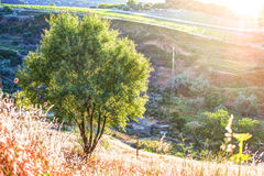 A ray of light breaks through the dramatic sky at sunset and hit a solitary tree on a hill Royalty Free Stock Image