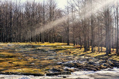 A ray of light in the forest. A sunny winter day in the mountains stock photos
