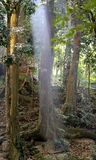 Ray of light in the jungle Stock Photos
