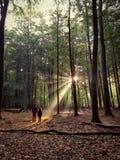 Ray of light. Mesmerising light through autumn trees Royalty Free Stock Image