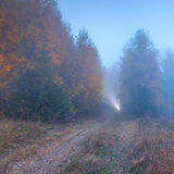 Ray of light in misty autumn forest Stock Image
