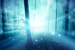 Ray of light mystic foggy forest tree landscape Royalty Free Stock Image