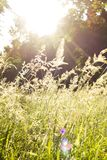 Ray of Light shines through the grass on a spring day royalty free stock image