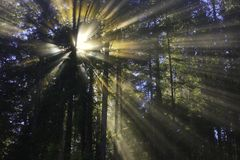 Ray of light in the trees Royalty Free Stock Image