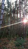 Ray of light between the trees royalty free stock photos