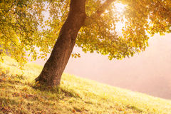 Ray of light through the trees in the misty morning Stock Images